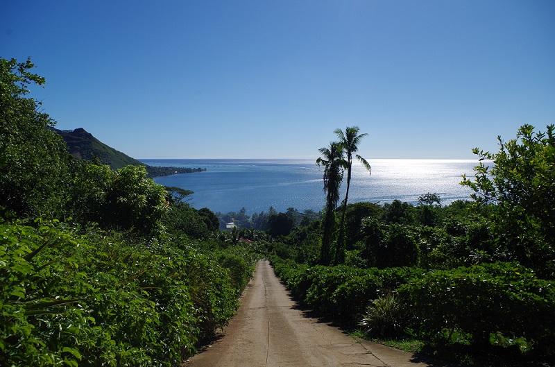 Le chemin vers le Tropical Garden est long et très pentu